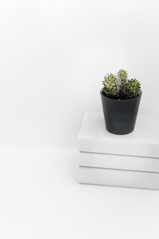 Succulent plant in black pot on book stacked against white background