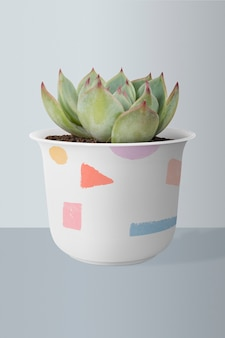 Succulent plant in a cute pot