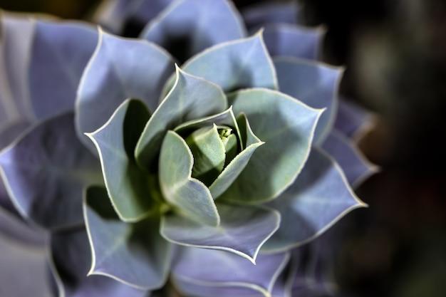식물원의 다육 식물