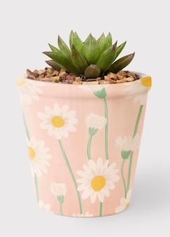 かわいいピンクの鉢に多肉植物