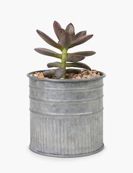 缶の中の小さな多肉植物