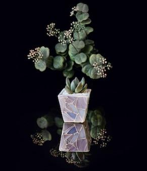 黒のアクリルに分離された紫色の植木鉢に多肉植物