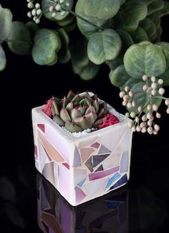 黒のアクリルに分離された紫のセラミック植木鉢に多肉植物