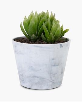 Modello di pianta succulenta in un piccolo vaso grigio