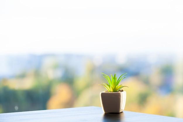 현대 침실에서 창 난간에 즙이 많은 식물