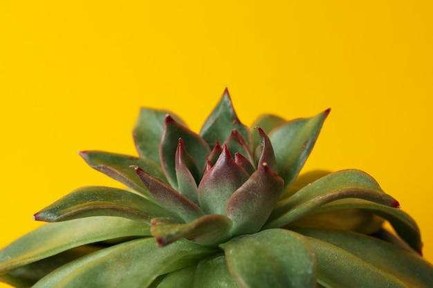 黄色の表面に多肉植物