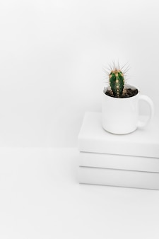 Succulent plant in pot on stacked of books against white background