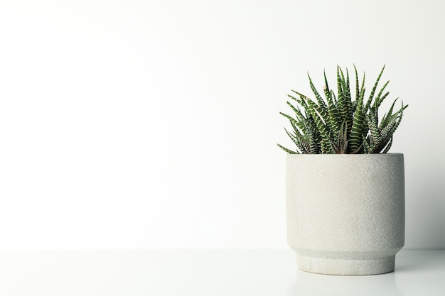 Succulent plant in pot on white table, space for text