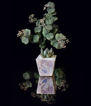 Succulent plant  in purple flowerpot isolated on black acrylic
