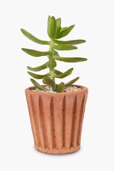 Succulent plant in a terracotta pot home decor object