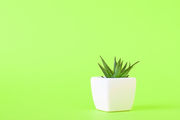 Succulent plant in white pot on green with copy space.