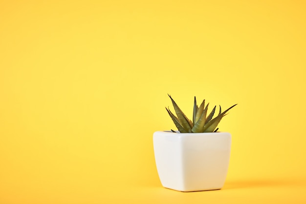 Succulent plant in white pot on yellow with copy space. minimal style design concept
