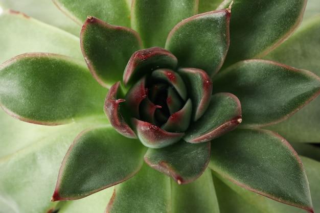 Succulent plant on whole surface