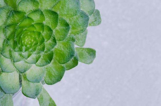 Succulent plant with copy space