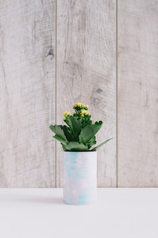 Succulent plant with yellow flowers planted in can
