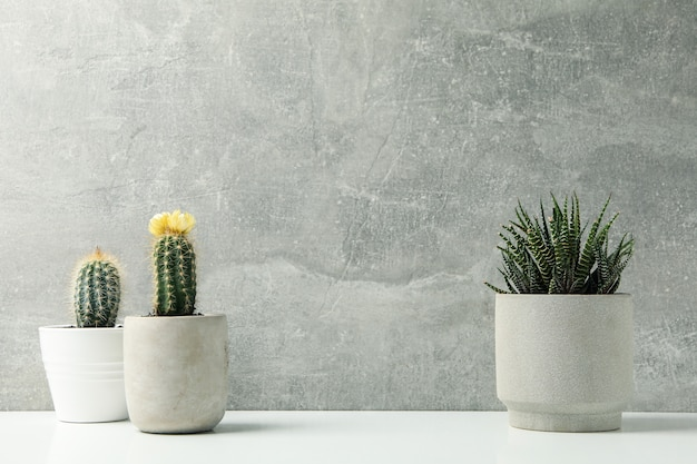 Succulent plants against grey surface. houseplants