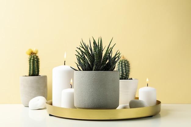 Сочные растения и свечи на белом столе. комнатные растения