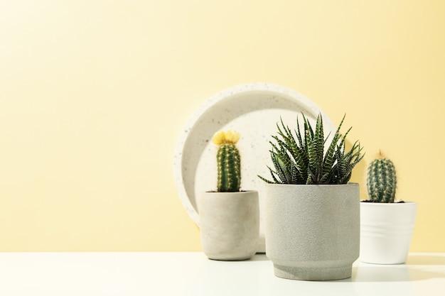多肉植物と白いテーブルの上の大理石のトレイ。観葉植物