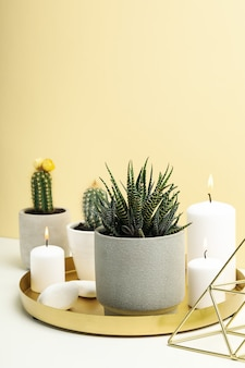 Succulent plants and candles on white table. houseplants