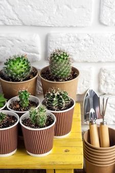 종이컵에 즙이 많은 식물 수집