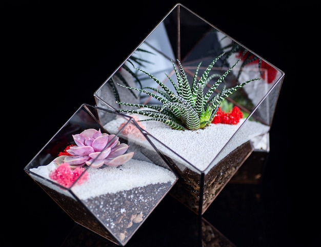 Succulent plants in glass box