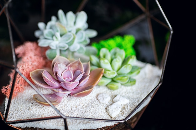 Succulent plants in glass box