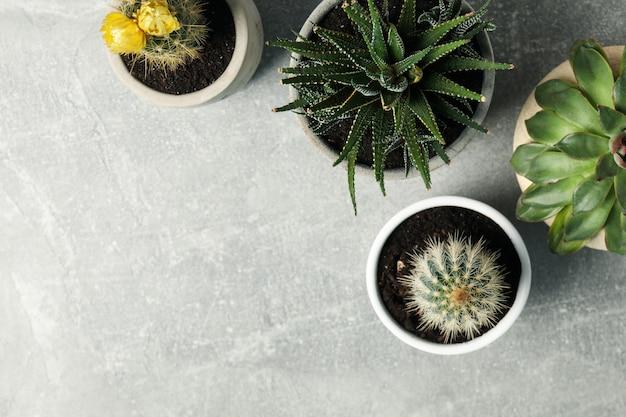 Succulent plants on grey surface. houseplant