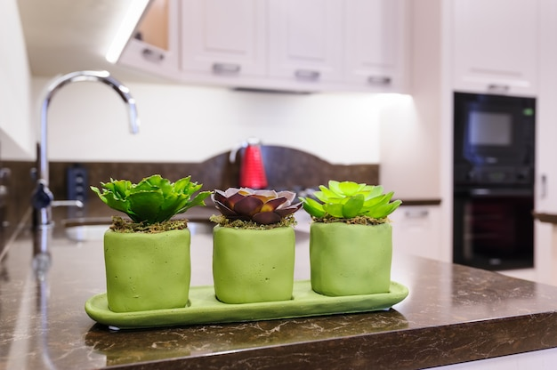 Succulent plants at the kitchen