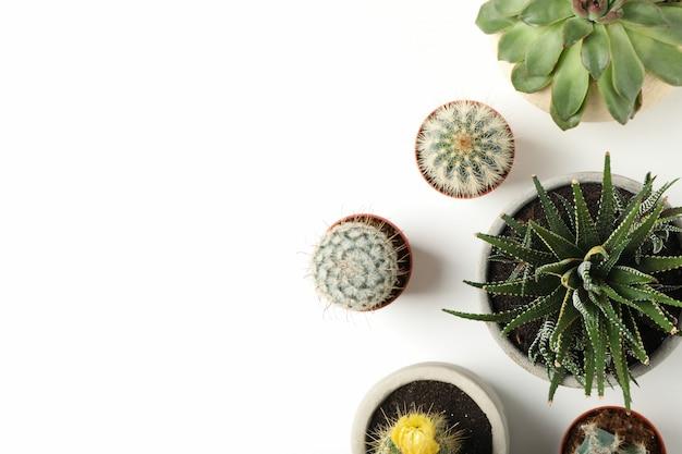 白い表面に多肉植物。観葉植物