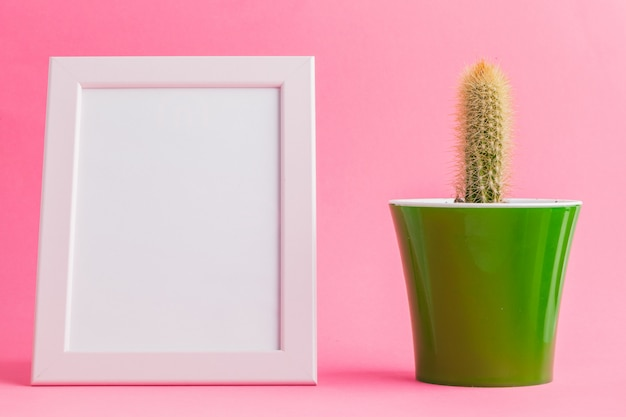 Succulent plants on pastel pink background.