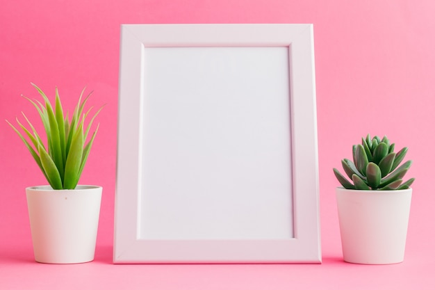 Succulent plants on pastel pink . flat lay.