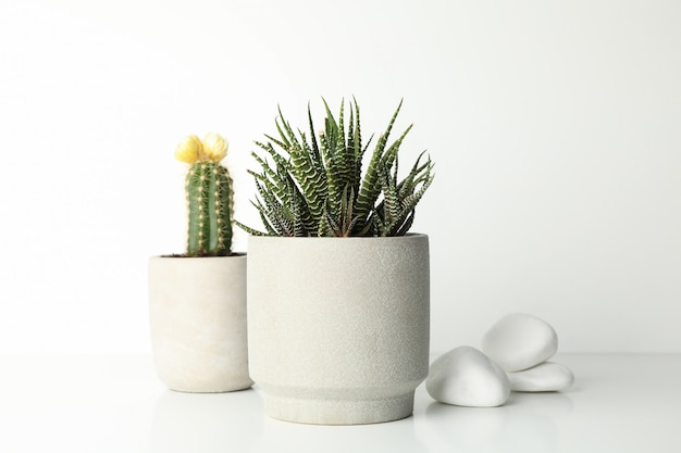 Succulent plants in pots and stones on white surface