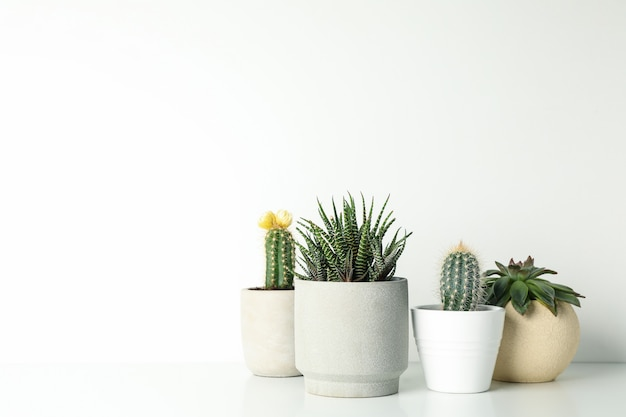 Succulent plants in pots on white surface