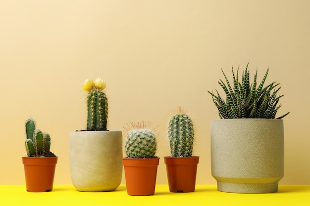 Succulent plants in pots on yellow table, space for text