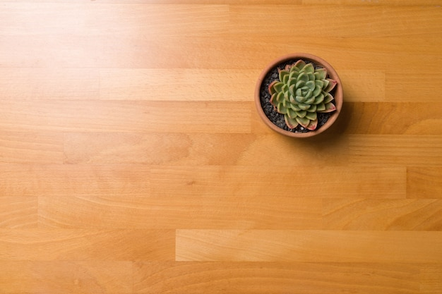Succulent in pot wooden table background with copy space.