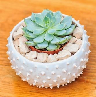 Succulent in a small ceramic flower pot
