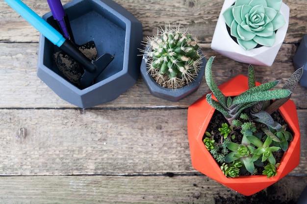 鍋に多肉植物とサボテン。木製のテーブルの平面図です。植物を植えるための道具と土地。春植えコンセプト
