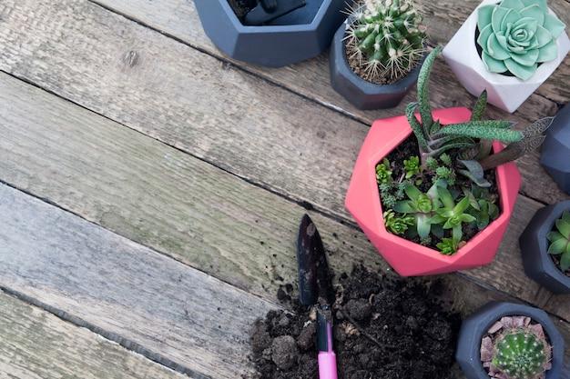 鍋に多肉植物とサボテン。コピースペースを木製のテーブルの上から見る。植物を植えるための道具と土地。春植えコンセプト