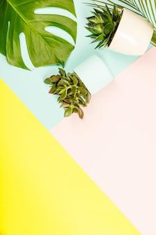 多肉植物とモンステラはパステルカラーの背景に植物を残します