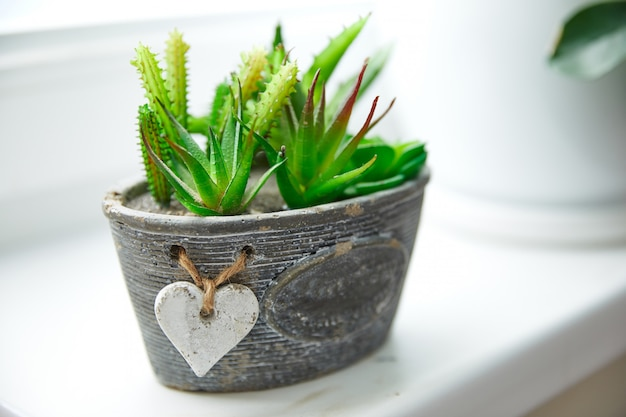 Succulents and cacti in a gray pot stands on a white windowsill