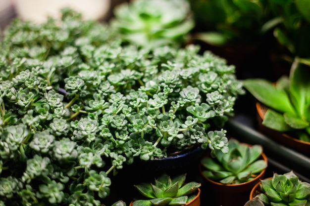 Succulents and cacti, plants for home and garden