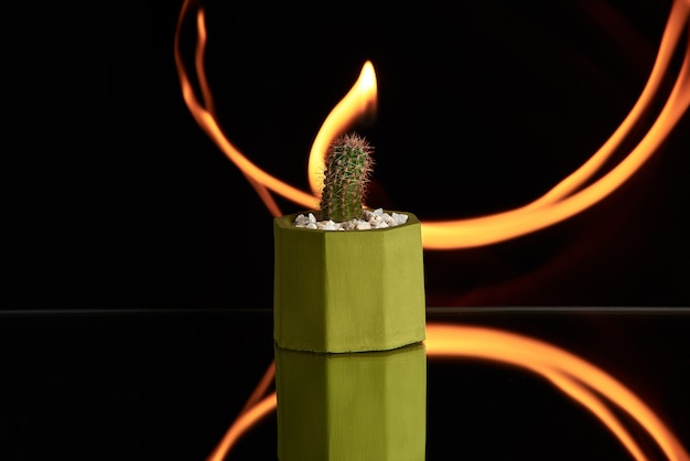 Succulents, cactus in green concrete pot on orange light background. clean photo