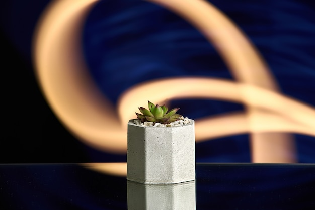 Succulents in concrete pot on blue light background. clean photo
