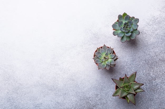 Succulents on a gray stone table copy space