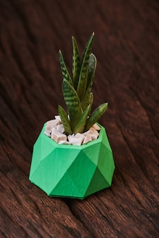 Succulents in green concrete pot on wooden.