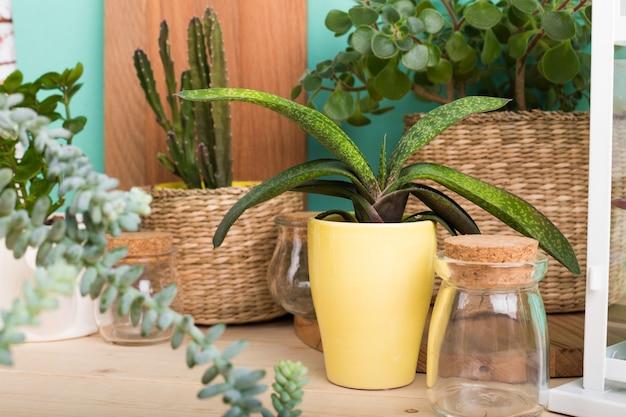 多肉植物、鉢植えの観葉植物