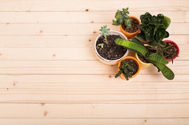 다육 식물, 화분에 담긴 집 식물