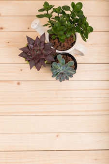 Succulents, house plants in pots