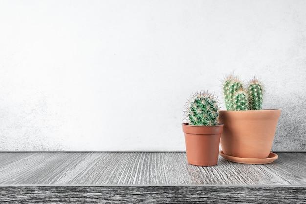 Суккуленты в керамических горшках. концепция внутреннего сада дома - изображение