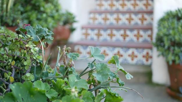 미국 캘리포니아에서 정원 가꾸기 화분의 다육 식물. 온실 식물, 점토 냄비. 멕시코 정원 디자인, 건조한 사막 장식 화초 재배. 식물 장식 녹지입니다. 계단에 화려한 타일